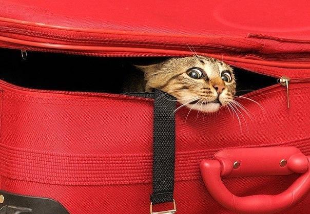 Выбираем чемодан для путешествия